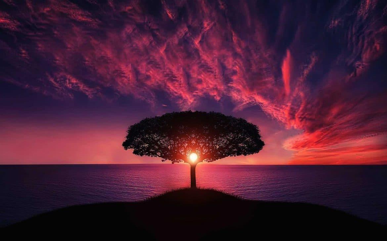 Baum bei untergehender Sonne in lila leuchtenden Abendhimmel