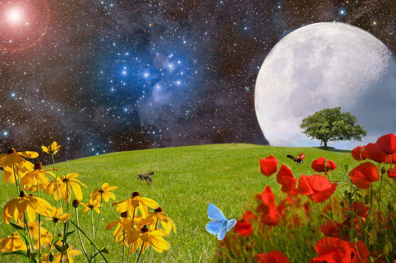 Blumenwiese mit Mond im Hintergrund