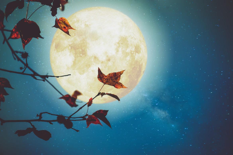 Vollmond, Sternenhimmel und Herbstlaub